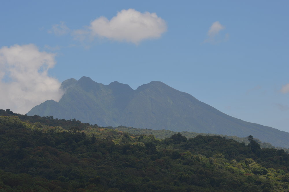 Mgahinga gorilla national park in Uganda part of the virunga massif with sabinyo volcaic peaks in far display