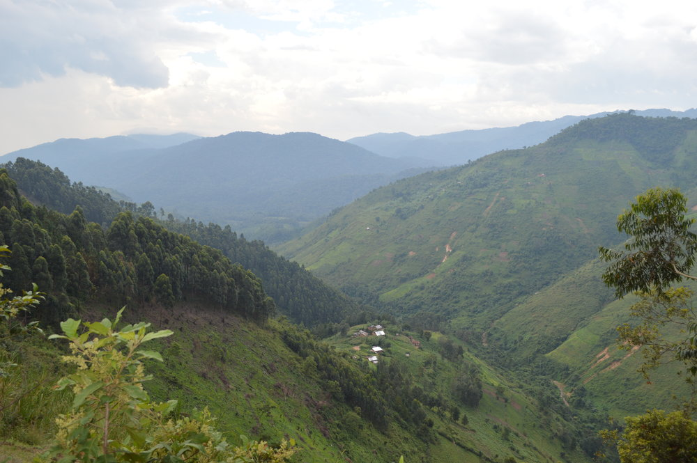 Community natural settlement patterns with Bwindi forest in the hanging valleys at far extreme end.