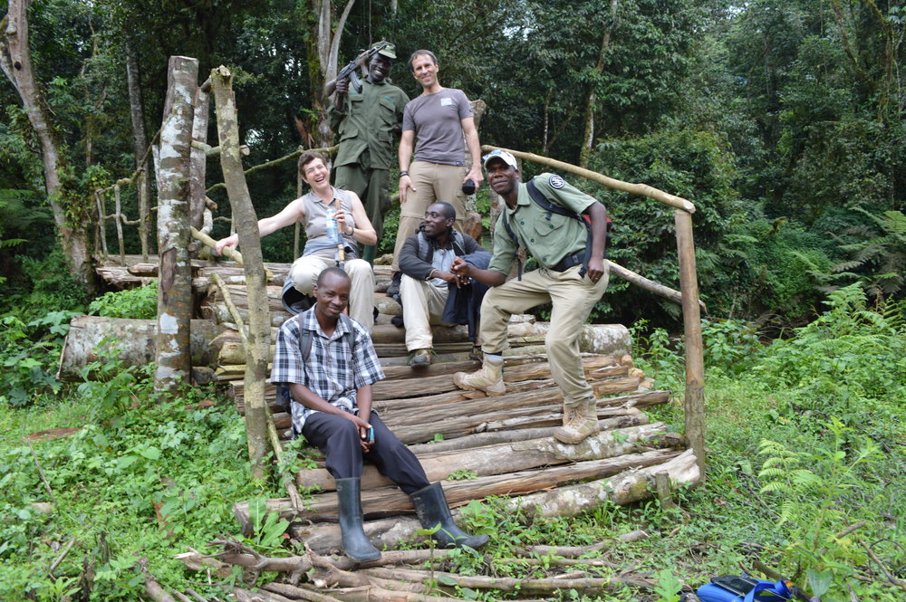 Tourists exiting the forest boundary with rangers,guides,porters and escorts after their whole day experience with Mountain gorillas-Bwindi impenetrable national park.