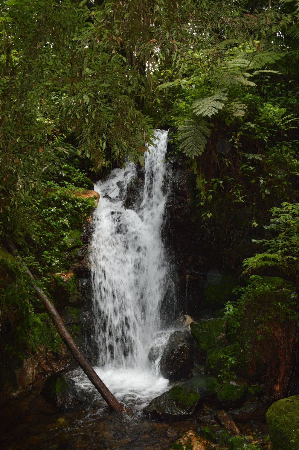 Bwindi impenetrable national park natural waterfall