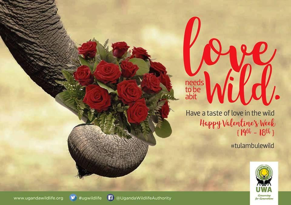 Valentine special week in the wild..jpg