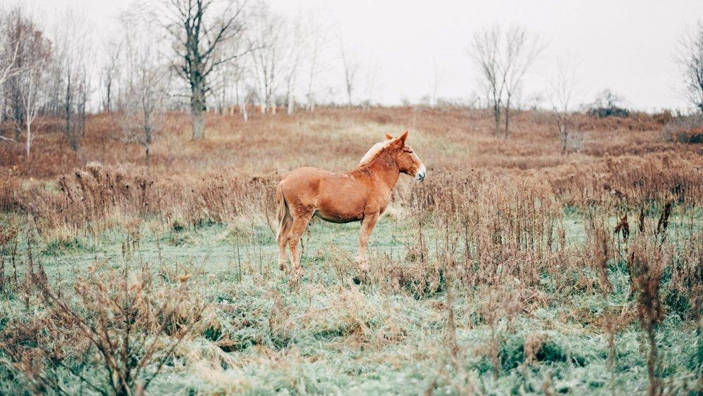 Enchanted Barn Wisconsin Wedding_4936.jpg