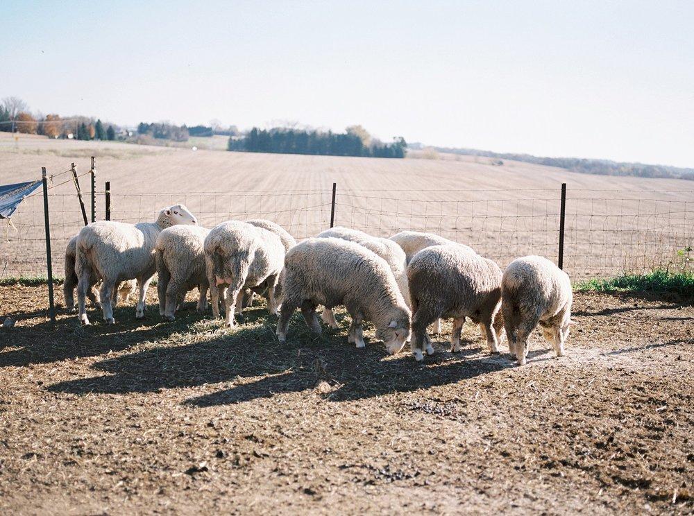 Legacy Hill Farm Wedding_4422.jpg