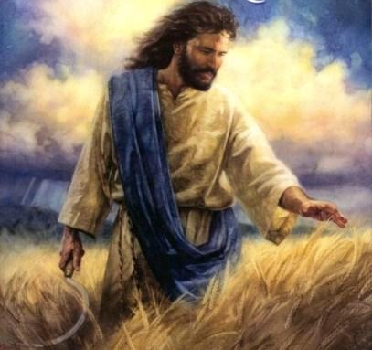 Jesus in wheat field.jpg