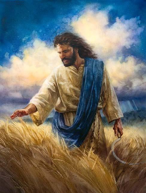 jesus mustard seed.jpg