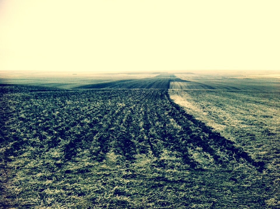 A freshly seeded durum field.