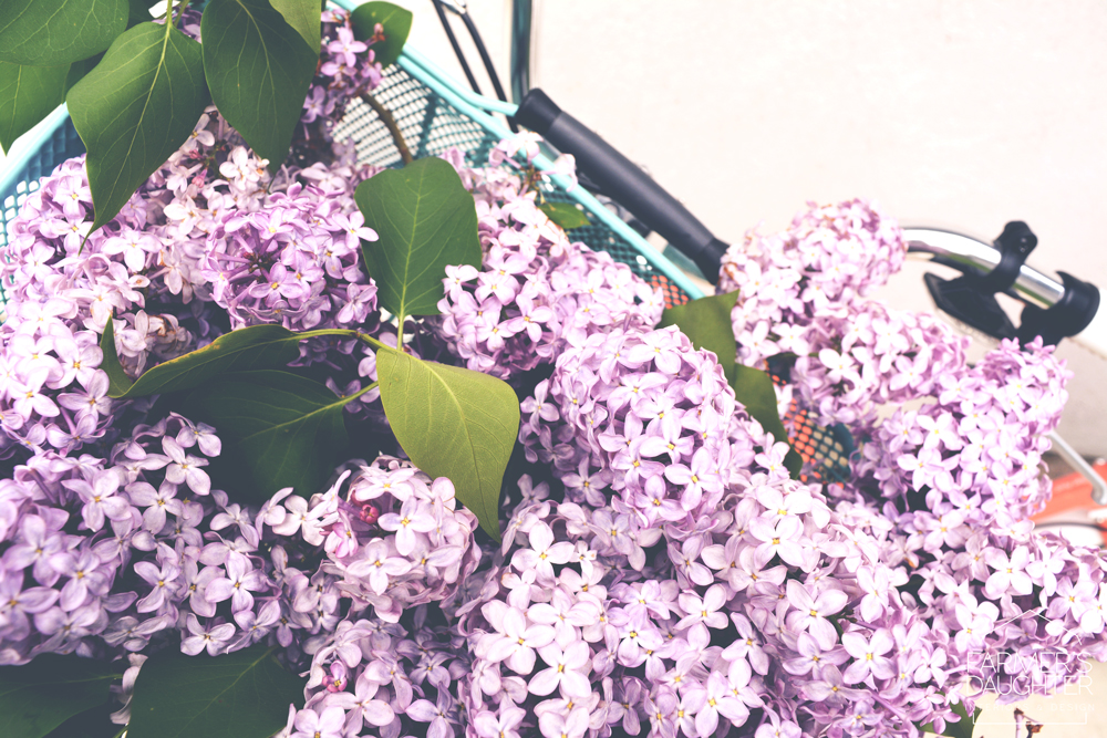 saskatchewan-lilacs-3.jpg