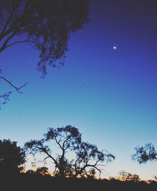 Eucalyptus sunset on a kangaroo sanctuary. Doesn't get more #Australian than that. 🇦🇺 @thekangaroosanctuary