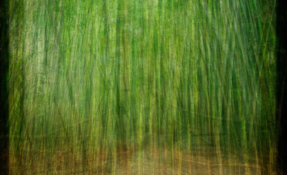 Bamboo Forest (2013)