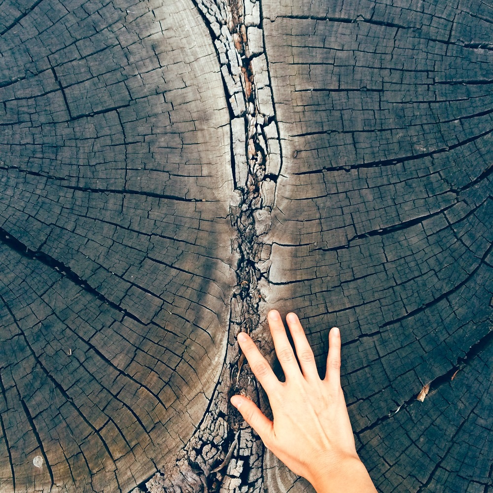 [Image Description: the photo shows the cross section of two tree trunks meeting, with a hand reaching out to touch the middle. Photo by Mia Mingus]