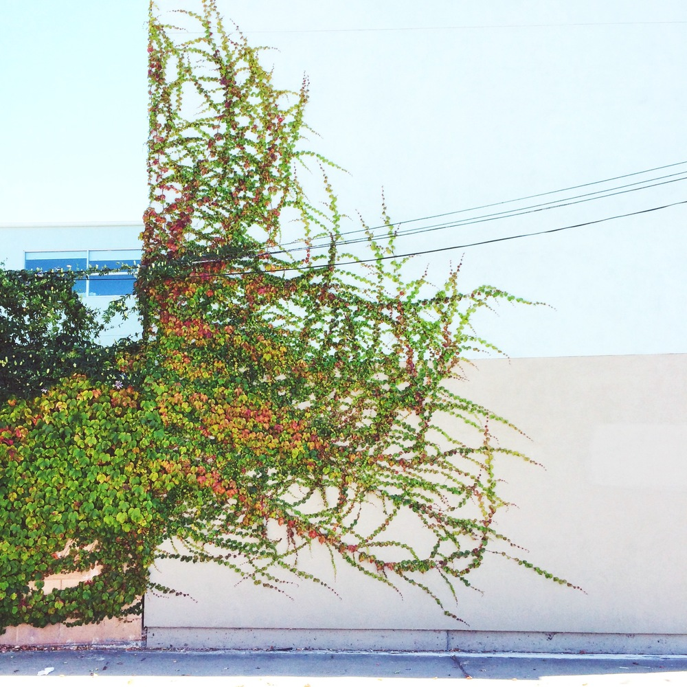 [Image of green and red vines growing on the side of a building. Photo by Mia Mingus]