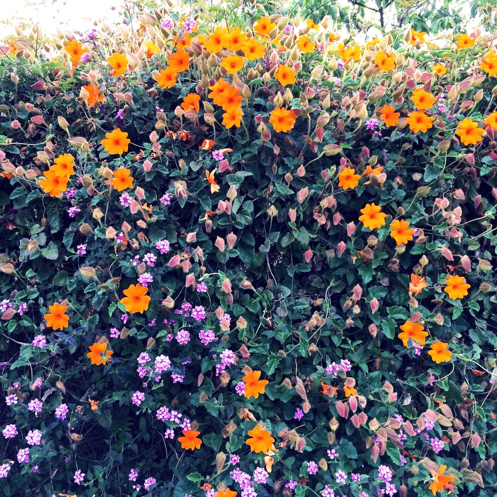 [Image of orange and purple flowers on a vine, filling up the entire frame. Photo by Mia Mingus.]