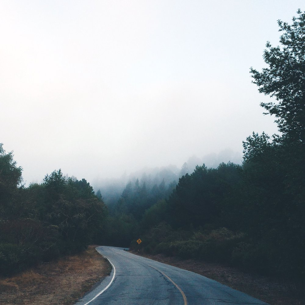 [Photo of a road as it curves into the woods and fog. Photo by MM]