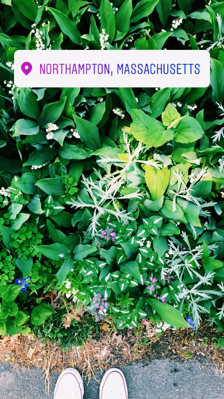 "[Photo of my shoes standing on the edge of the sidewalk in front of lush green plants with small purple, white and blue flowers poking out. At the top of the photo is a geo tag that reds, ""Nothampton, Massachusetts. Photo by MM.]"
