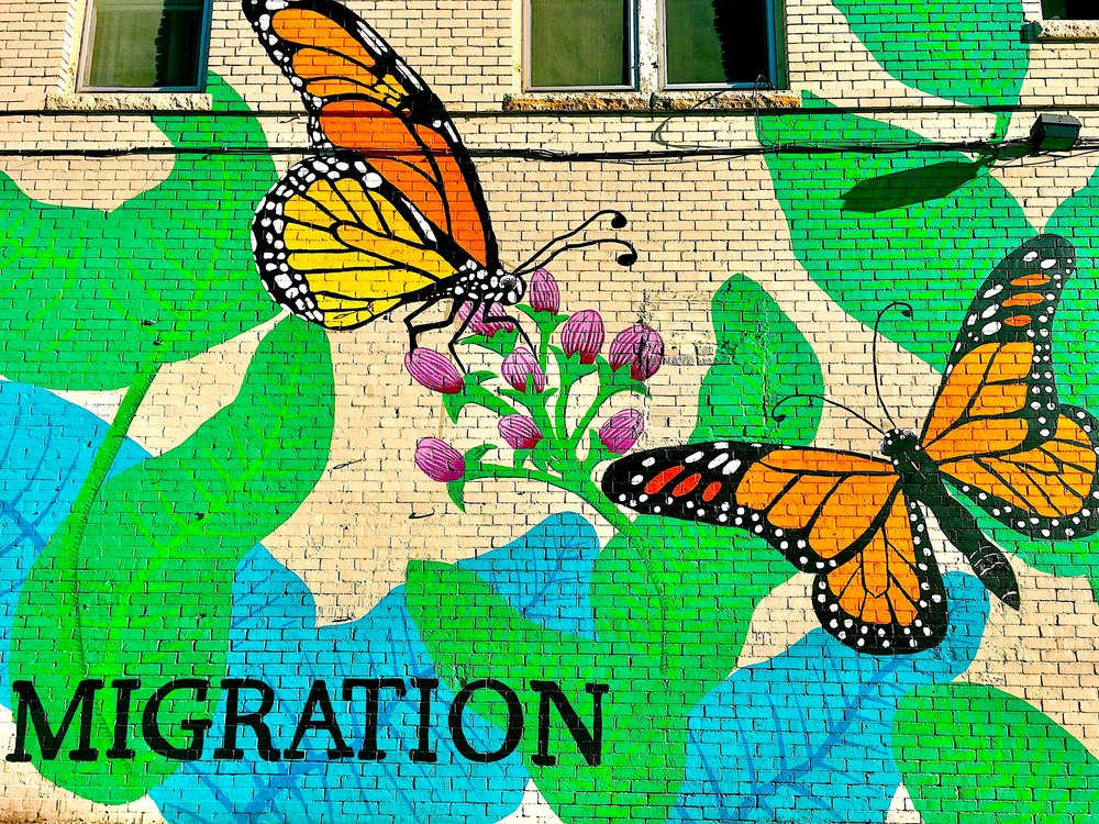 "[Photo of a mural of monarch butterflies with green and blue leaves and purple buds of flowers with the word, ""MIGRATION,"" written in black. Photo by MM.]"