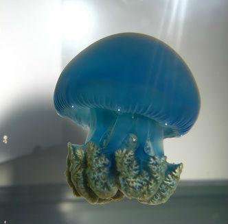 Blue Blubbers2.jpg
