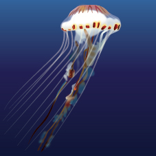 Compass-jellyfish.jpg