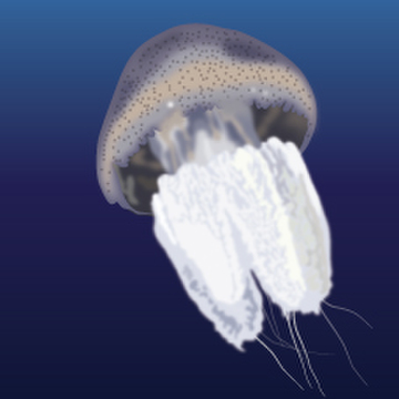 River Jellyfish