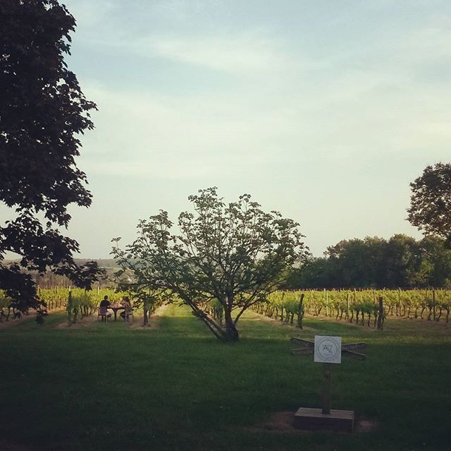 Chasing the sun and enjoying dinner in the vines. #bordeaux #vineyardhotels #honeymoon #newlyweds #winedestinations #winelover #iwanttobethem