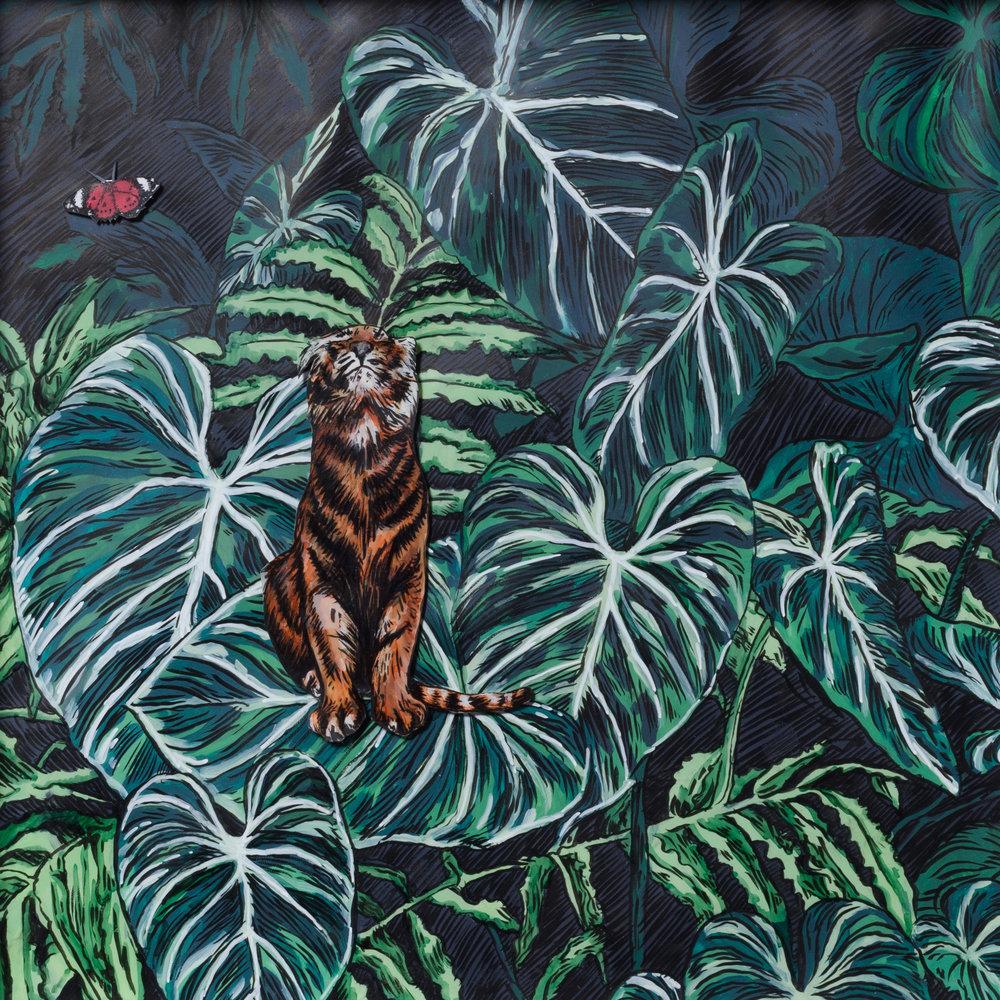 Tigris et Papilione