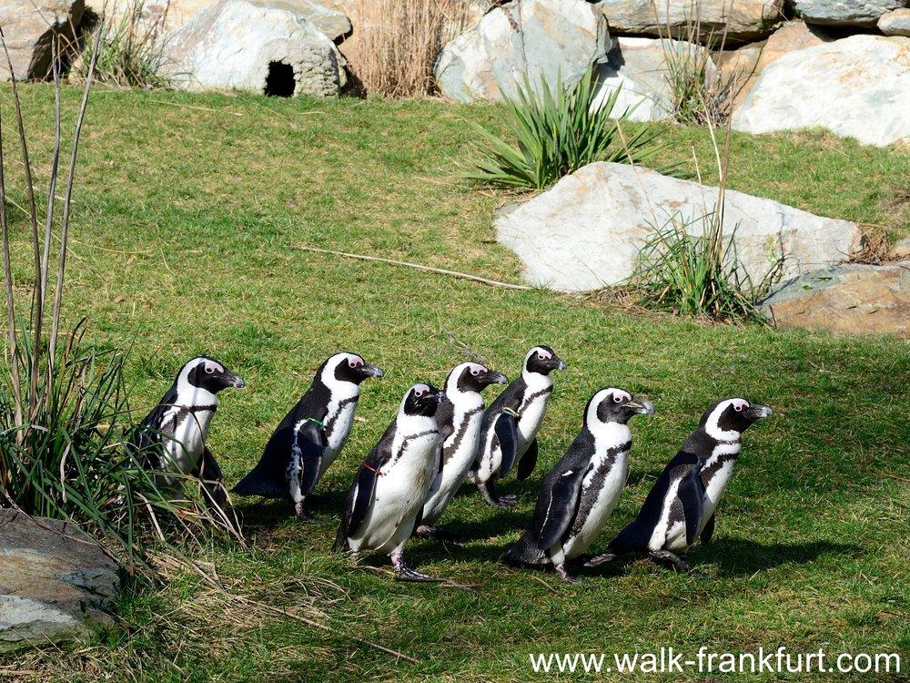Penguin Pinguin