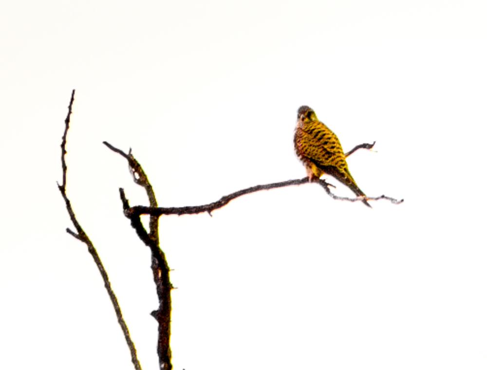 Bird_Hunt-013.jpg