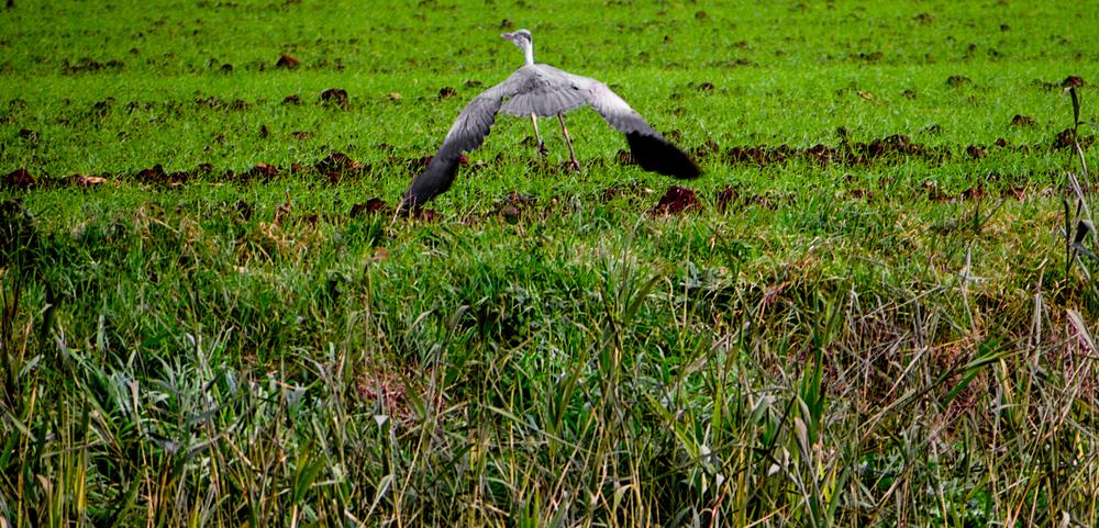 Bird_Hunt-016.jpg