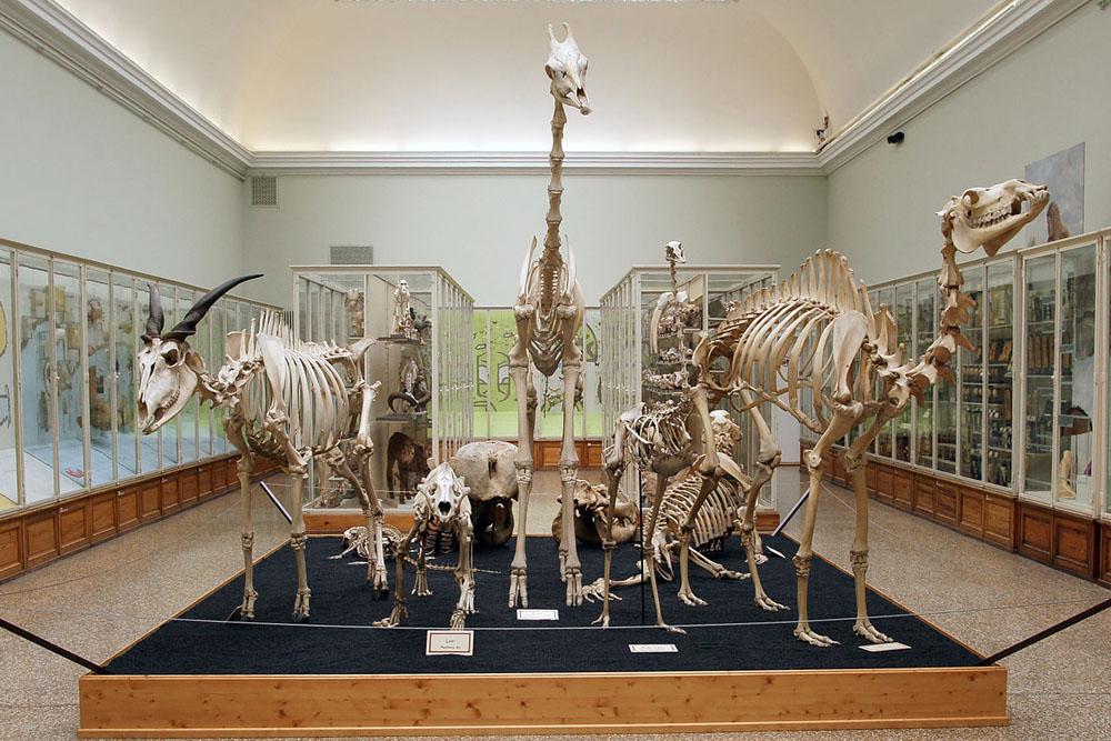 1280px-Musée_cantonal_de_zoologie_(Lausanne),_11.JPG