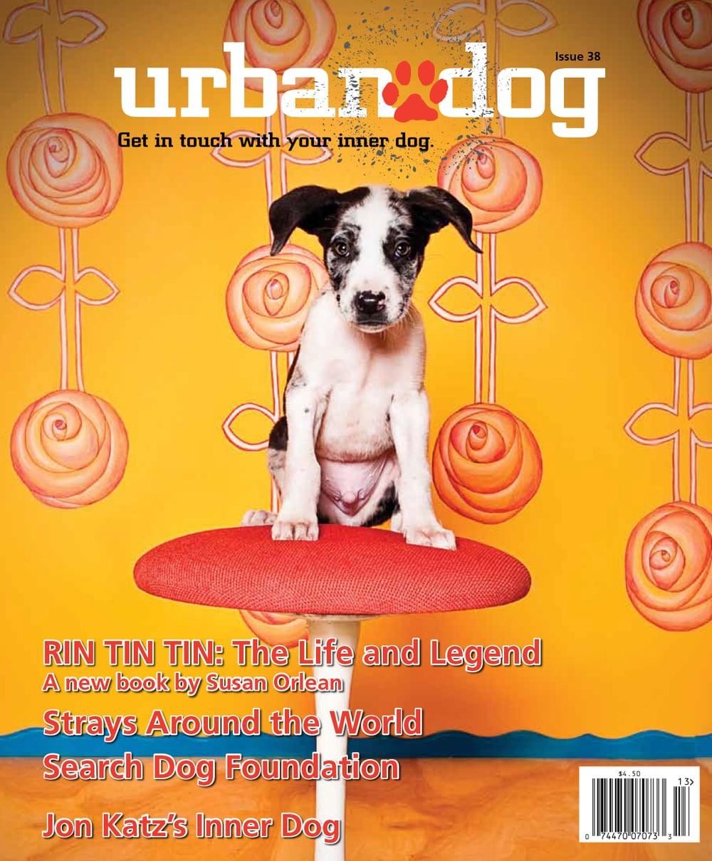 urbandogdiego.jpg