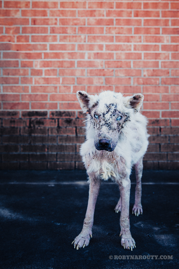 Abandoned Dog Disguised as a Little Lamb Emerges to School Us All