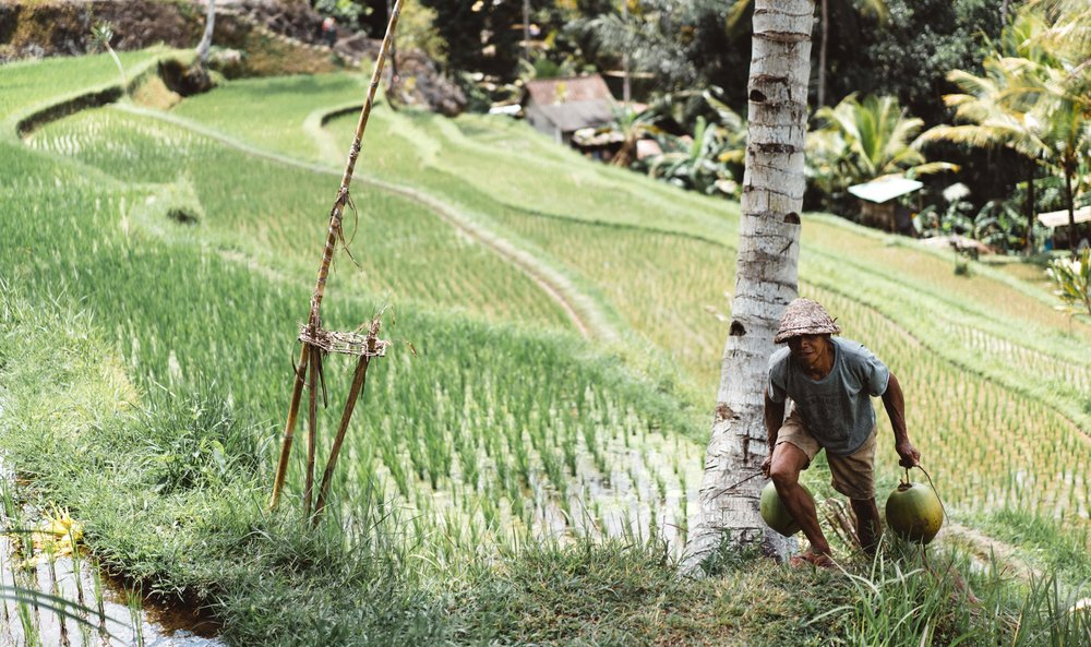 smallholder farmer in field