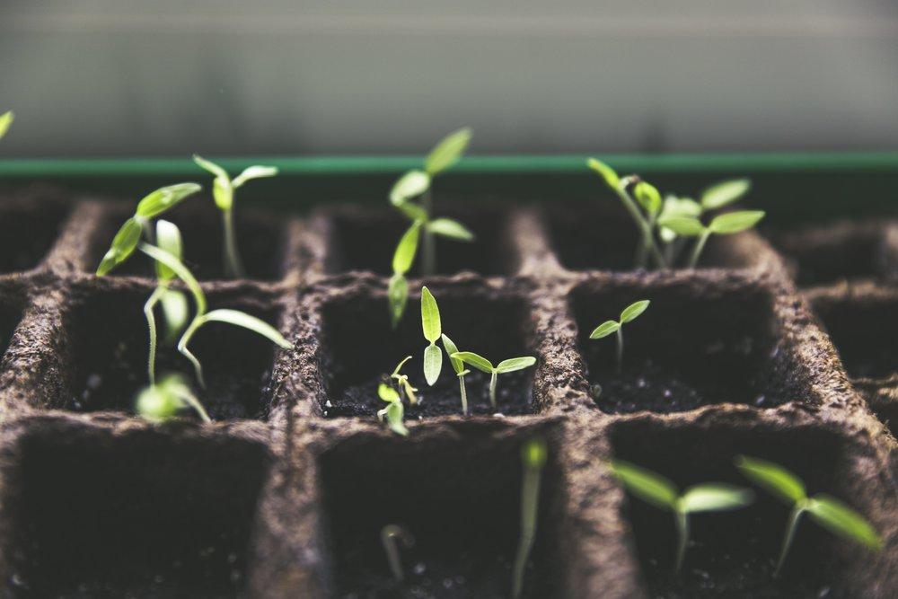 planting new seedlings