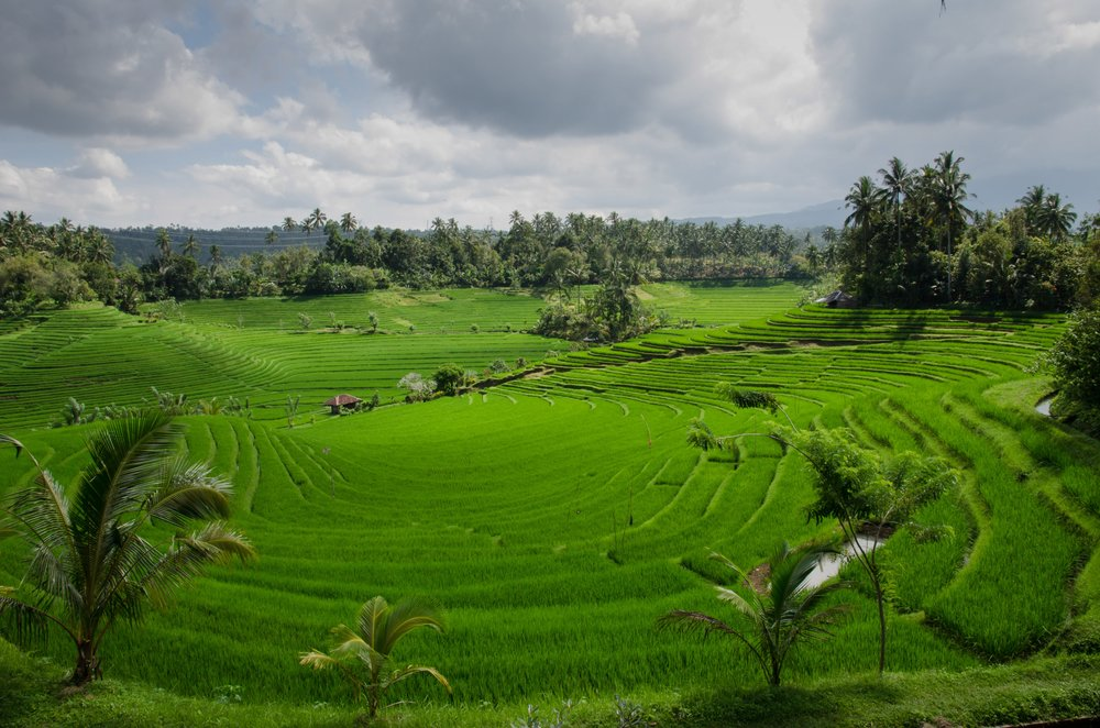 hectare of land