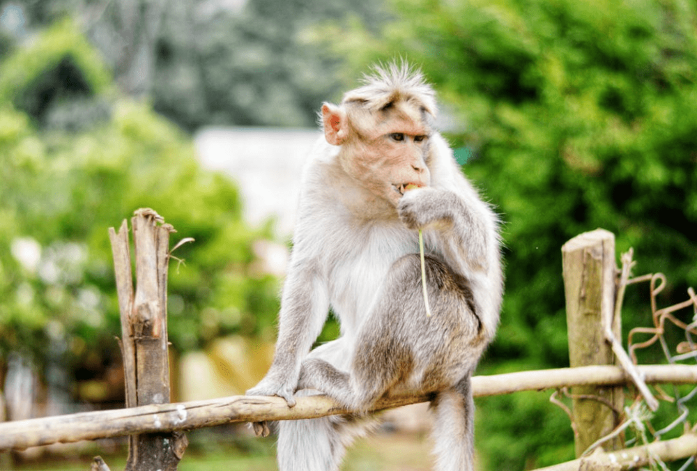 training a monkey to recite shakespeare