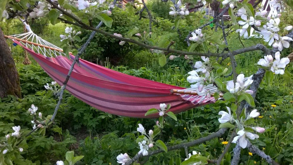 Riippukeinu omenankukkien keskellä.jpg