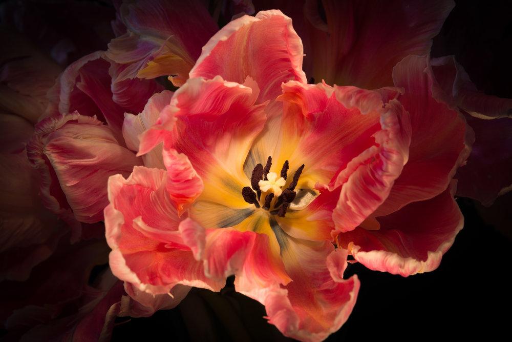 flowers-016.jpg