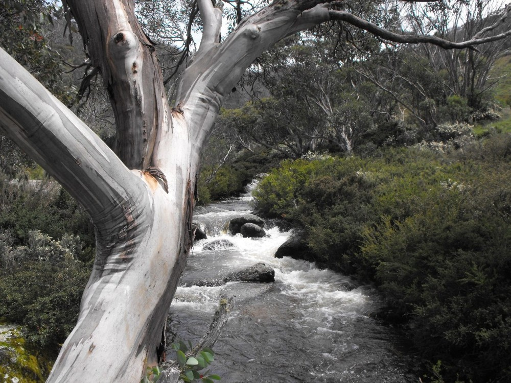 thredbo dead horse gap walk.jpg