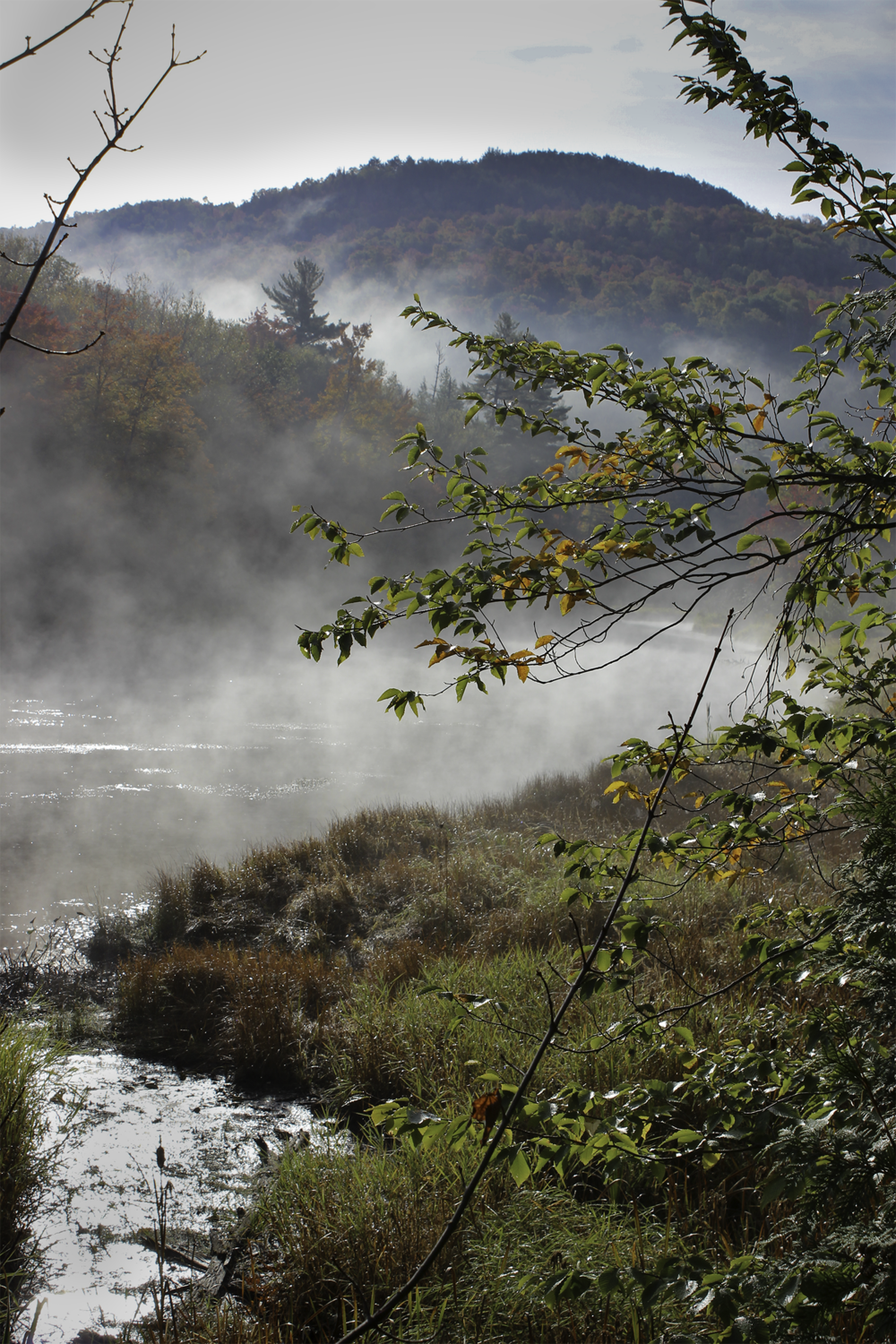 Misty Morning, Fall 2014