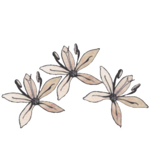 lek1.png