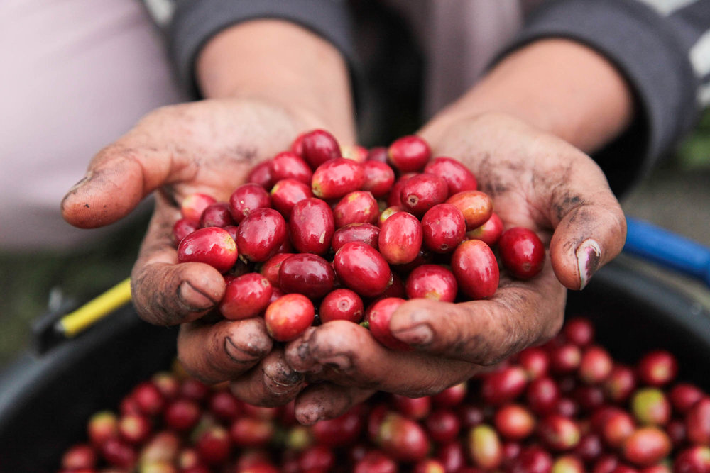 Sumatra-Coffee-Page-2.jpg