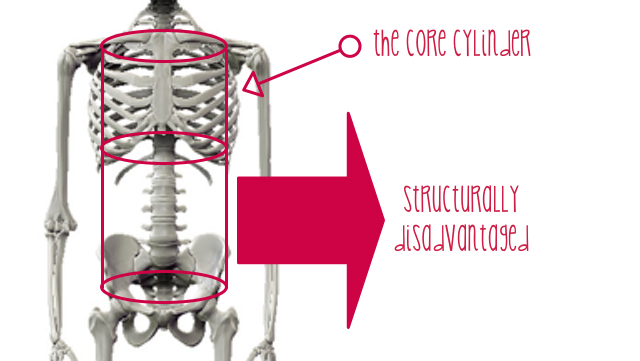 human female skeleton emphasizing core strength for women