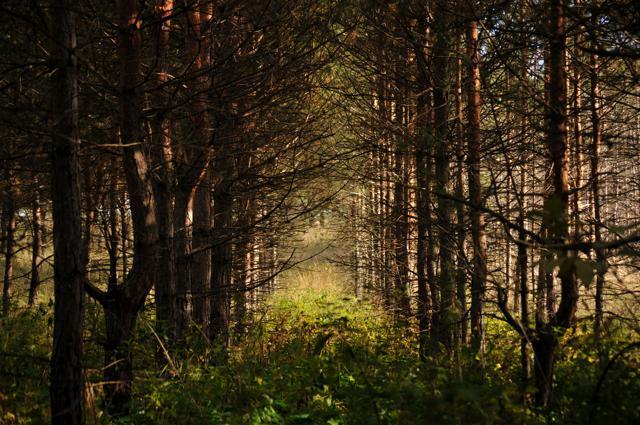 mtn_trees_.jpg