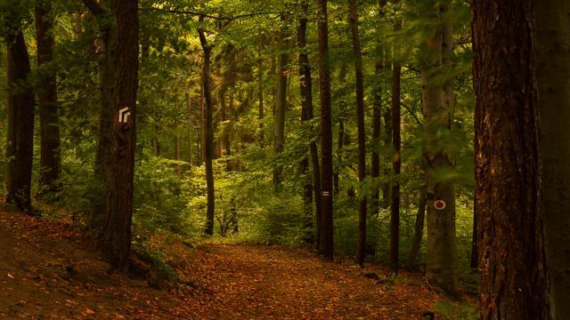 mtn_trees_3.jpg