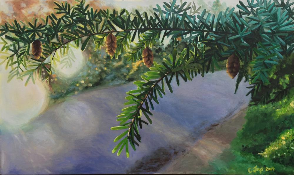 pinebranches.jpg