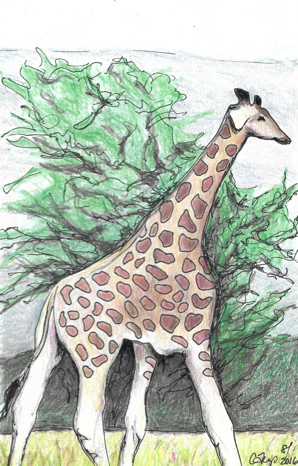 Giraffe, Nakuru Game Park, Kenya