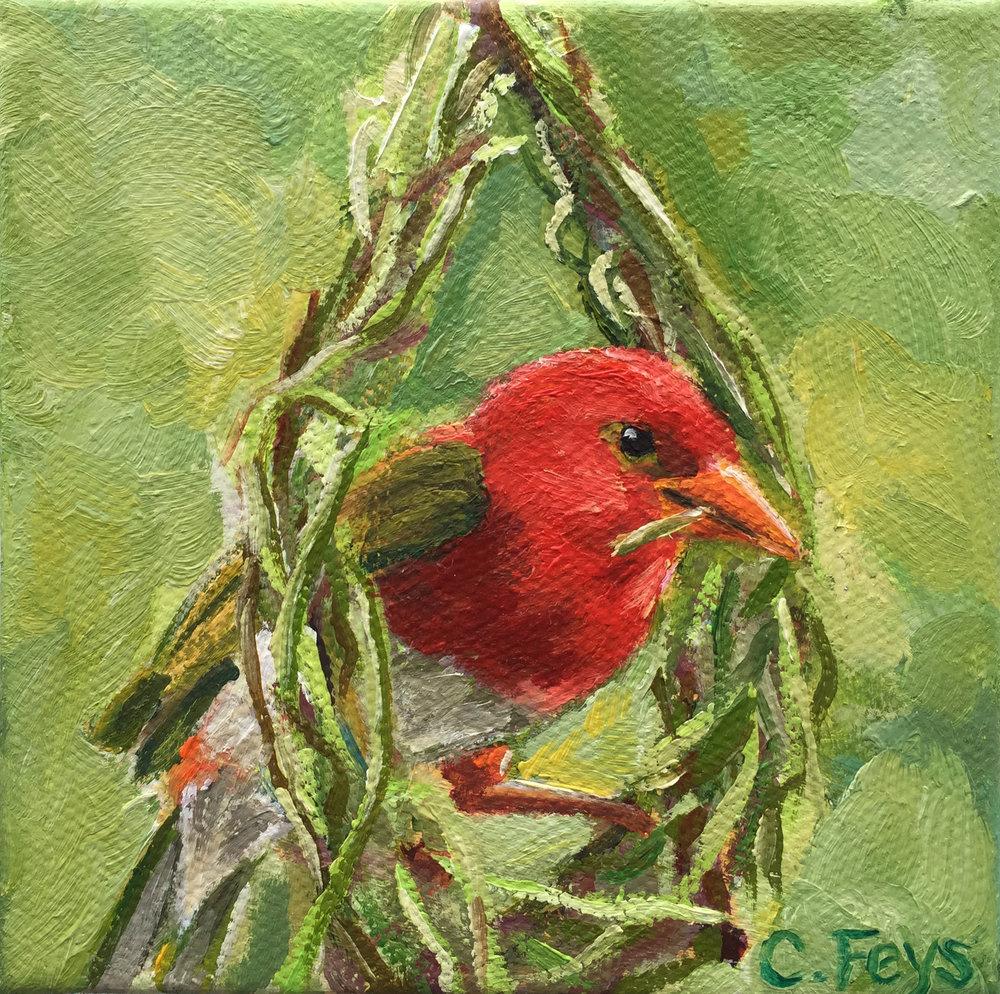 nesting bird.jpg