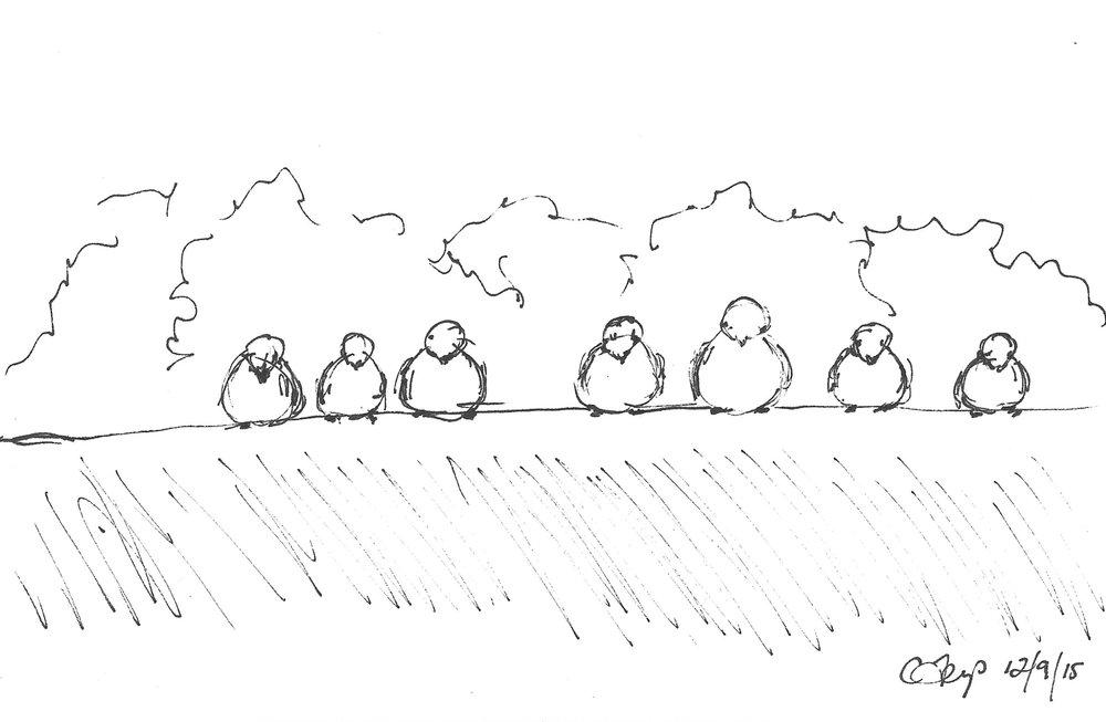 birds-2015.jpg