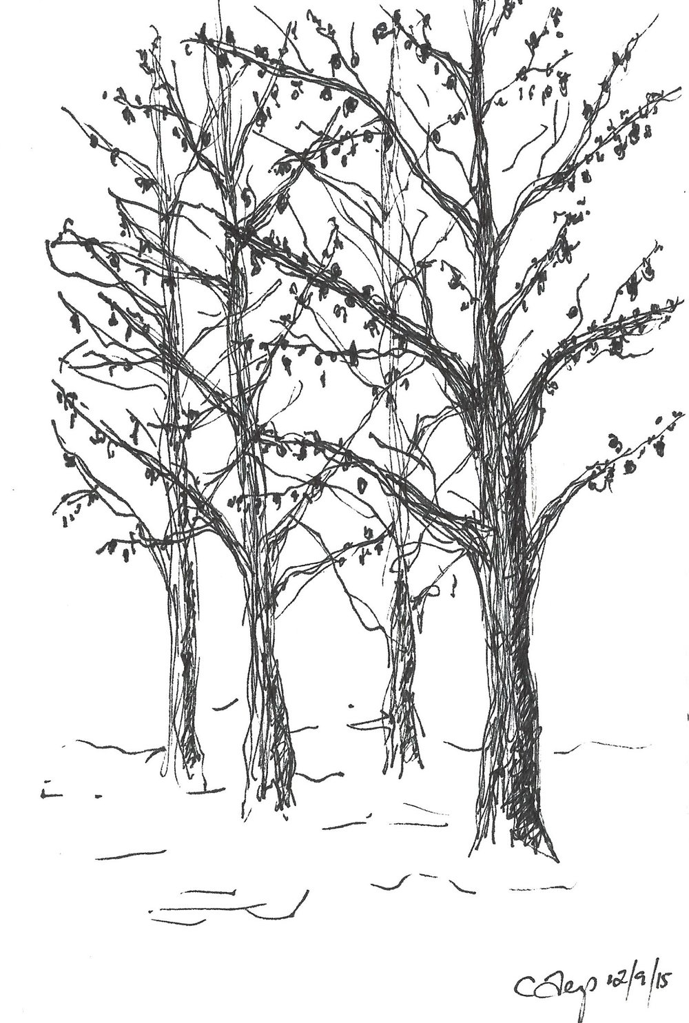 trees in the snow-2015.jpg