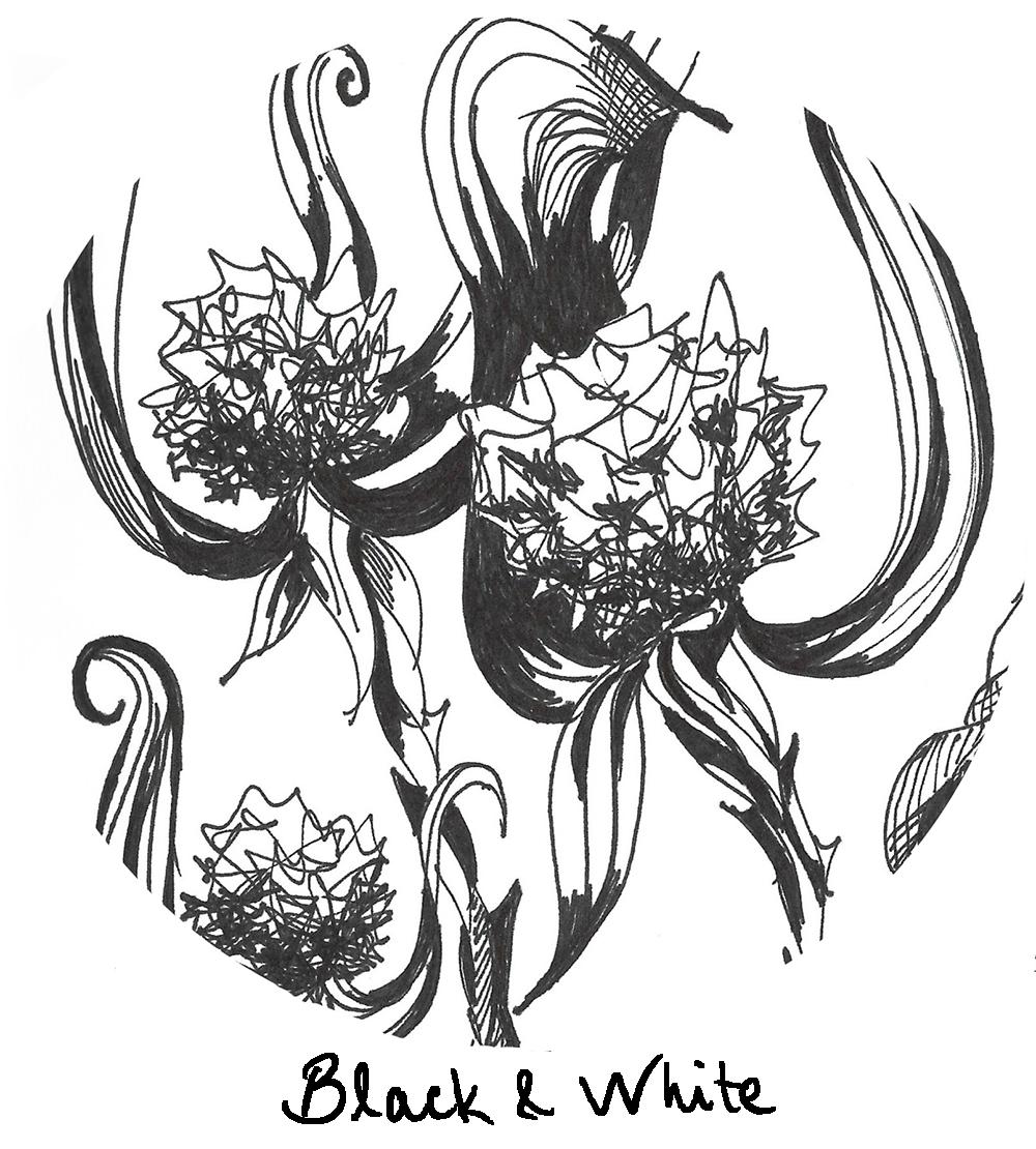 flower-illustration-scan-circle crop2.jpg