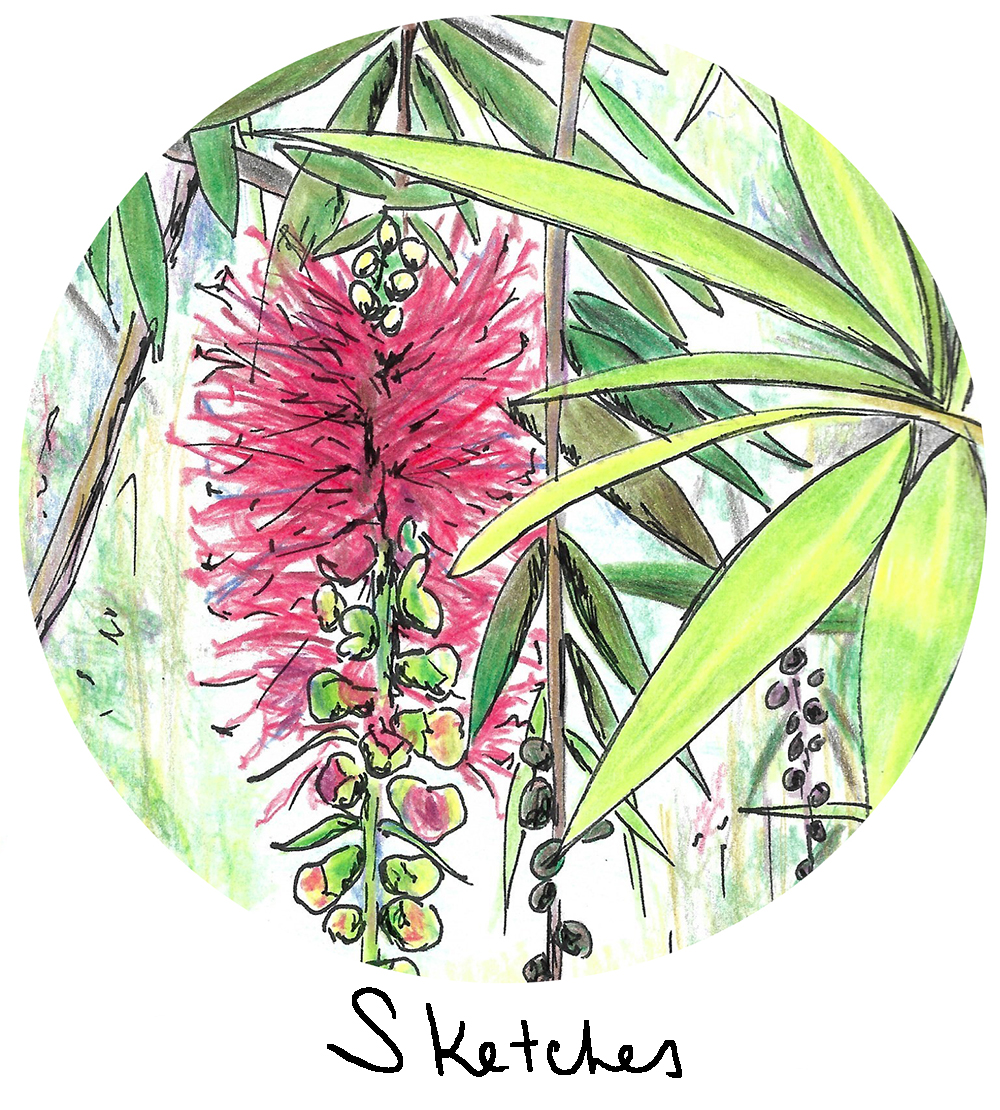 bottlebrush tree-kenya-2016-scan-circle crop2.jpg